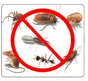 The best pest control Browns Plains company to remove all your pests