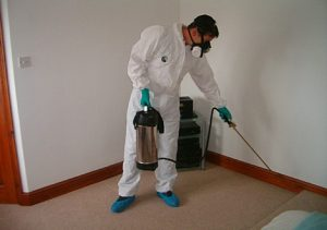 Gold Coast Pest Control spraying pests