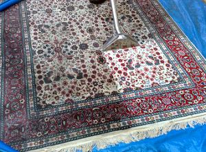 Steam cleaning a rug